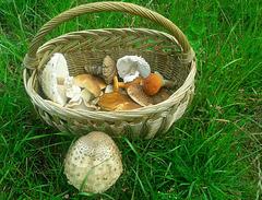 Mushroom gatherer basket