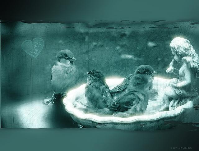birdies ♥