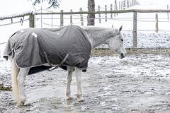 No Fun for Horses