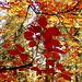 Les dessous de l'automne.