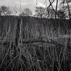 Derbyshire Wye - Redundant Fence Post