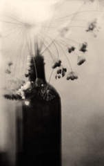 Dill Seed Head & Bottle Muse