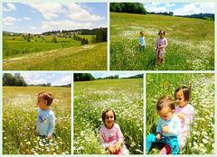 On their favorite meadow