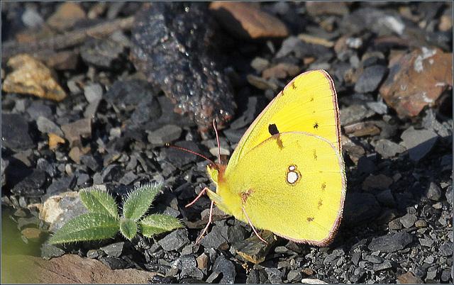 fil(et) à papillons - Page 8 39989320.e1c2208b.640