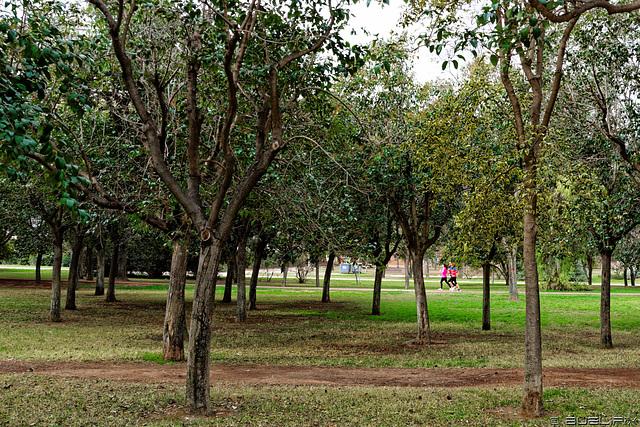 en el Jardin del Turia (© Buelipix)