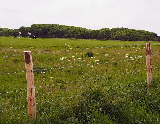wildlife compound