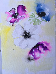 Anémones : aquarelle