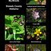 Wildflowers in my woods 2