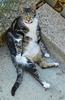 Le chat de ma voisine...Othello