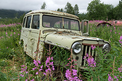 Willys' excursion in the green