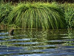 Moor Water