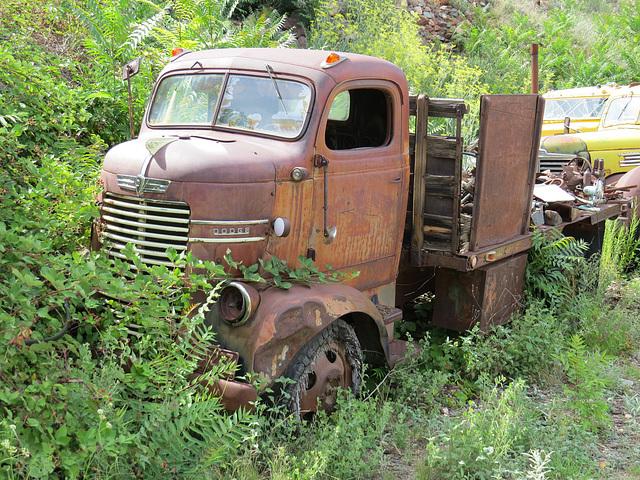 1942 Dodge COE Truck