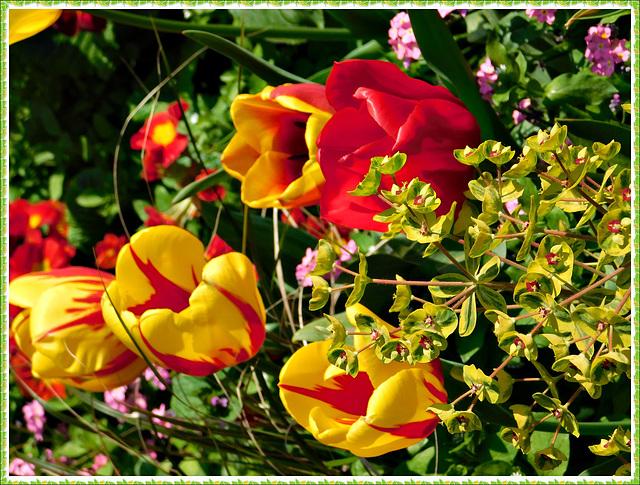 Parterre de fleurs à Plancoet