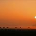 Koeien bij zonsondergang