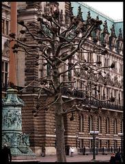 Hamburgs lustigster Baum