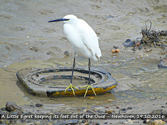 Little Egret keeping out of the Ouse - Newhaven - 19.10.2016