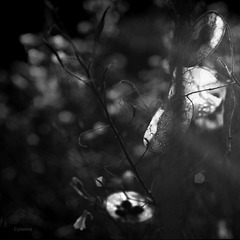 in the garden of darkness and light