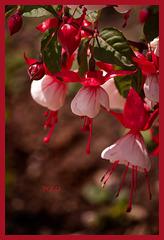 Mayo, mes de las flores