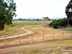 Track Behind Reserve.