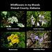 Wildflowers in my Woods