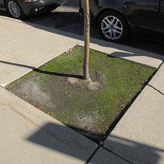 Moss garden for an urban sidewalk.