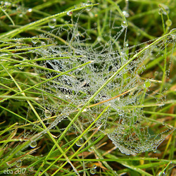 Web with Morning Dew!