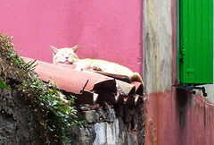 SI - Piran - Siesta auf Katzenart