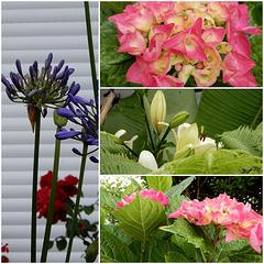 perles de pluie ce matin, le bonheur au jardin,
