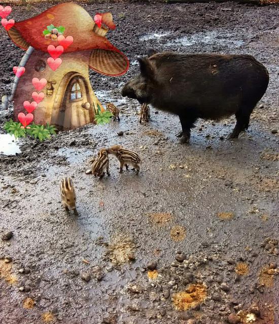 sweet wild little Piglets ❤