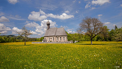Springtime meadow ~ Frühjahrswiese