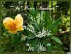 Bon  1er Mai  ..................