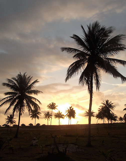 Lever de soleil àsaveur cubaine