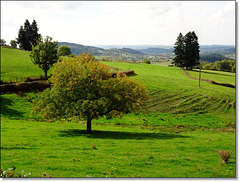 Le chêne / The oak [ON EXPLORE]
