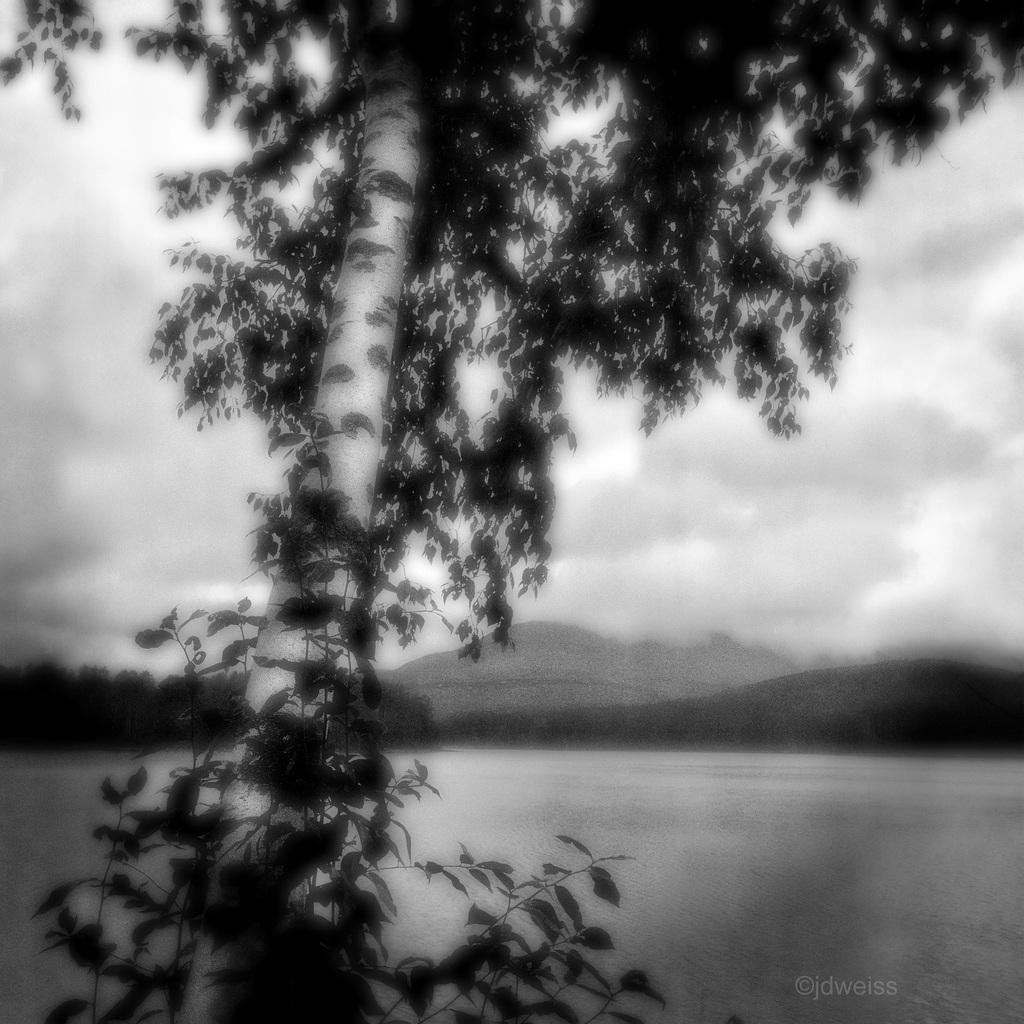 tree lake mountain sky
