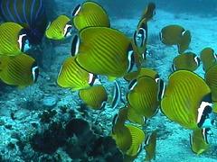 Banc de poissons dans la mer d'Andaman...en plongée de mes neveux !