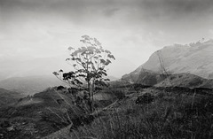 Dream of Keralan mountains