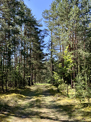 Gościencin, Polska