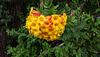 Opulent autumn flowers