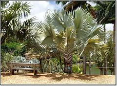 Sous les palmiers, la plage !