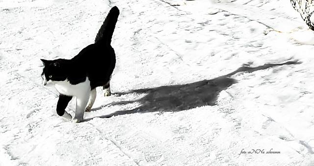 ABC - die Katze lief im Schnee ...