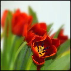 Envie de printemps ;-)