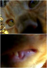 Fred tries selfies