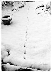 Wintereinbruch [3]