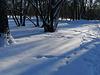 Следы на снегу. Footprints in the snow.