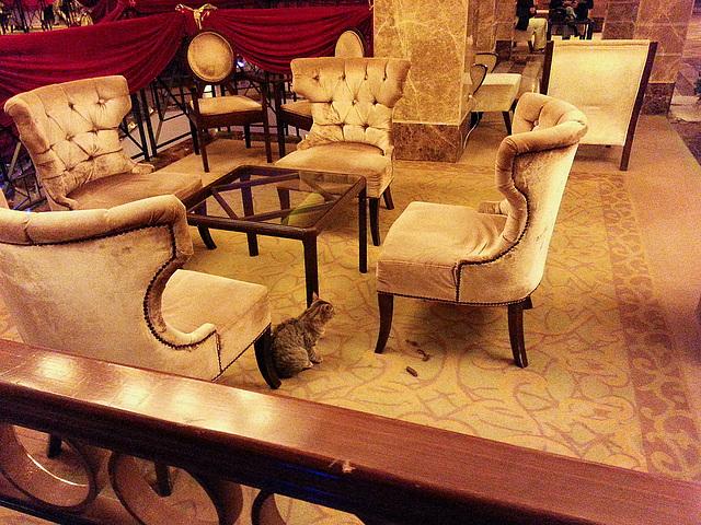 20151211 184955Hw [R~TR] Fantasia Hotel Deluxe,l Kusadasi