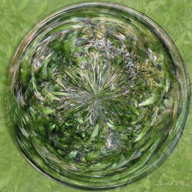 Moss ..
