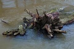 Au gré de sa fantaisie , Dame Loire charrie un arbre mort .