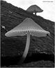 Mushroom Surprise