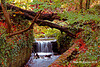 Autumn St Ann's Park Raheny Dublin  124 copy