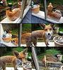 FoxyBusiness.S